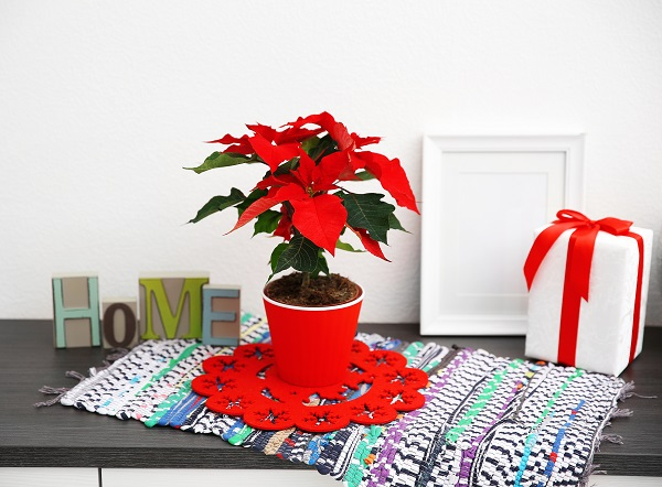 How Your Indoor Plants Can Be Used for Holiday Decoration